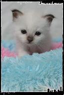Les bébés de Foxy et Pepper Joe5-363216e