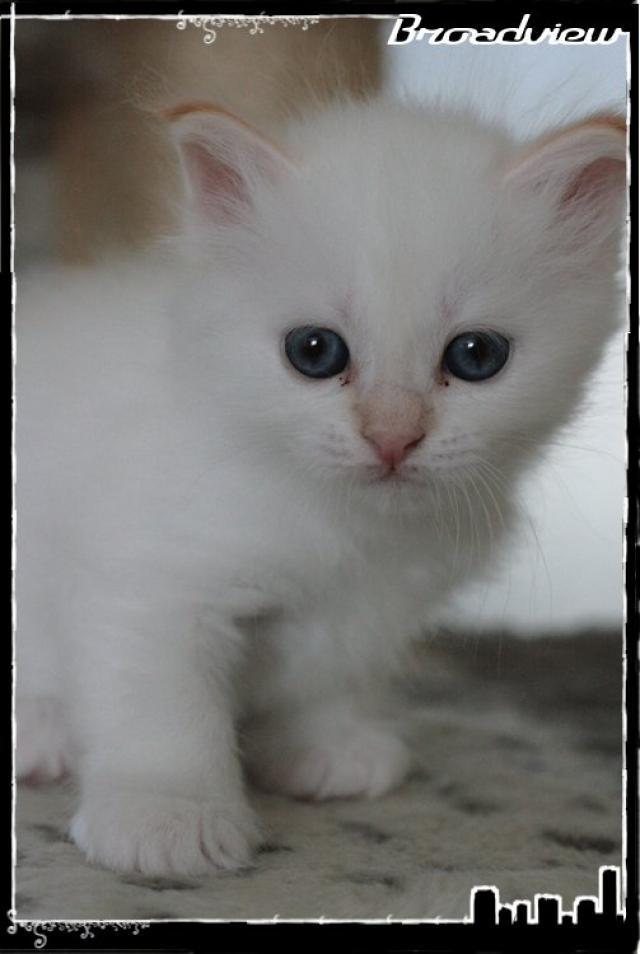 Les bébés de Foxy et Pepper 2012_07_15_grace3-3665cef