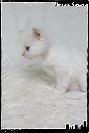 Les bébés de Foxy et Pepper Grace5-36321bd